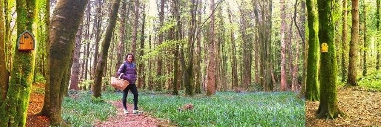Belleek woods in Ballina Co. Mayo