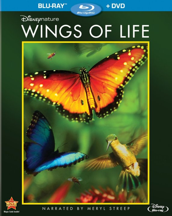 wings of life2