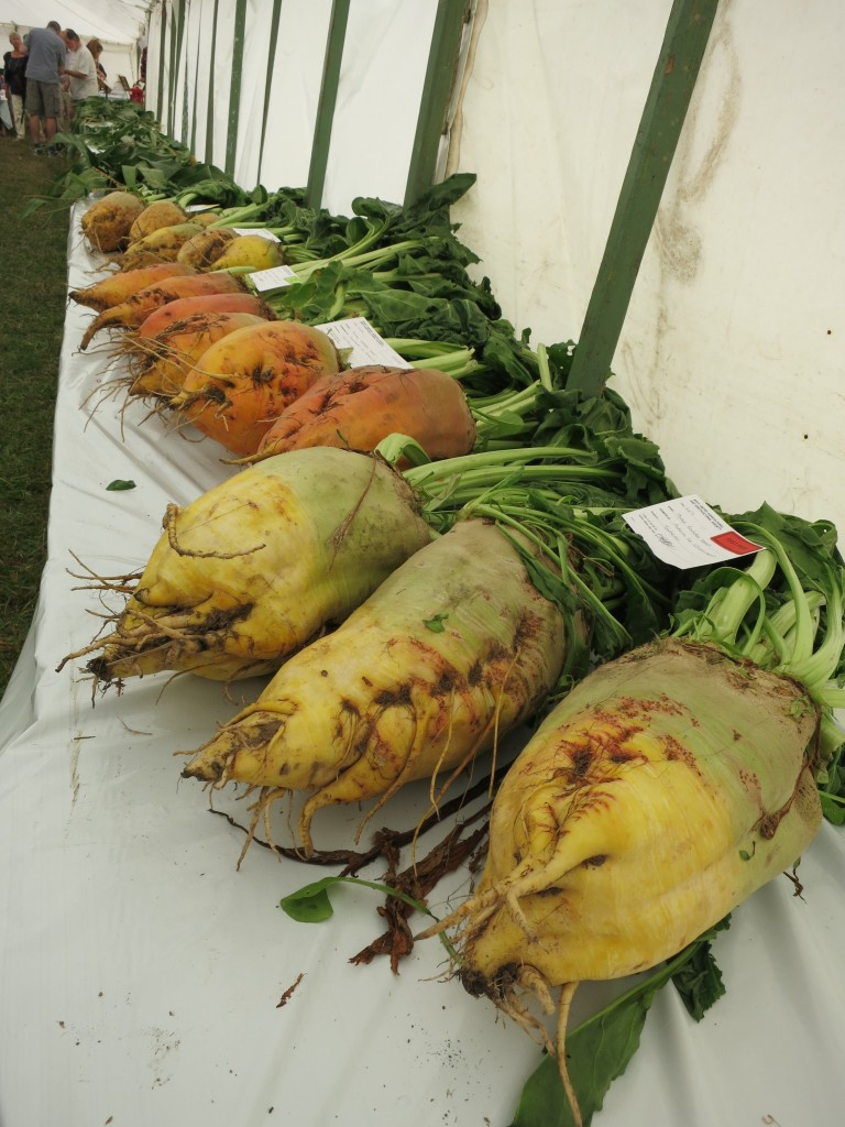 enormous beets!