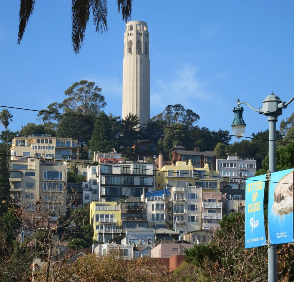 a view of Telegraph Hill with Coit Tower on top: a cluster of buildings on the side of the hill, all multi-story. Trees on the top, and the cylindrical, white, Coit Tower on top.