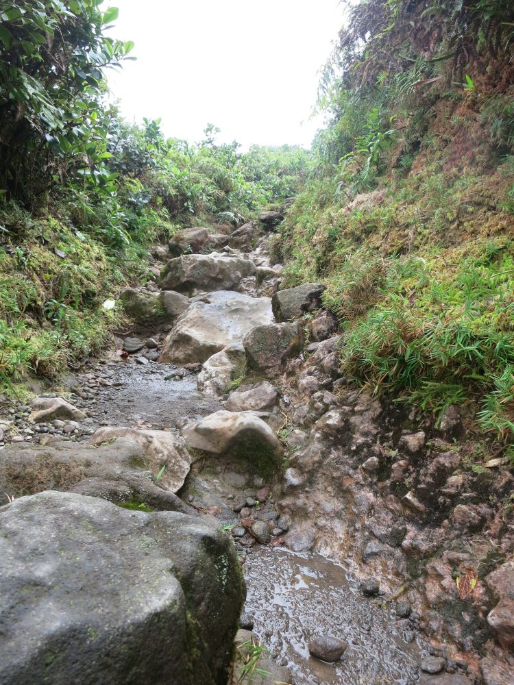 a view of a rocky part of the path up La Soufriere volcano in Guadeloupe. Both sides of the path are higher than the path, which stretches a short distance ahead. The path is strewn with rocks large and small, some of which look loose, while others seem embedded into the mud that is visible between them.