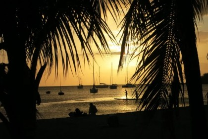 sunset view framed by palm trees on Guadeloupe