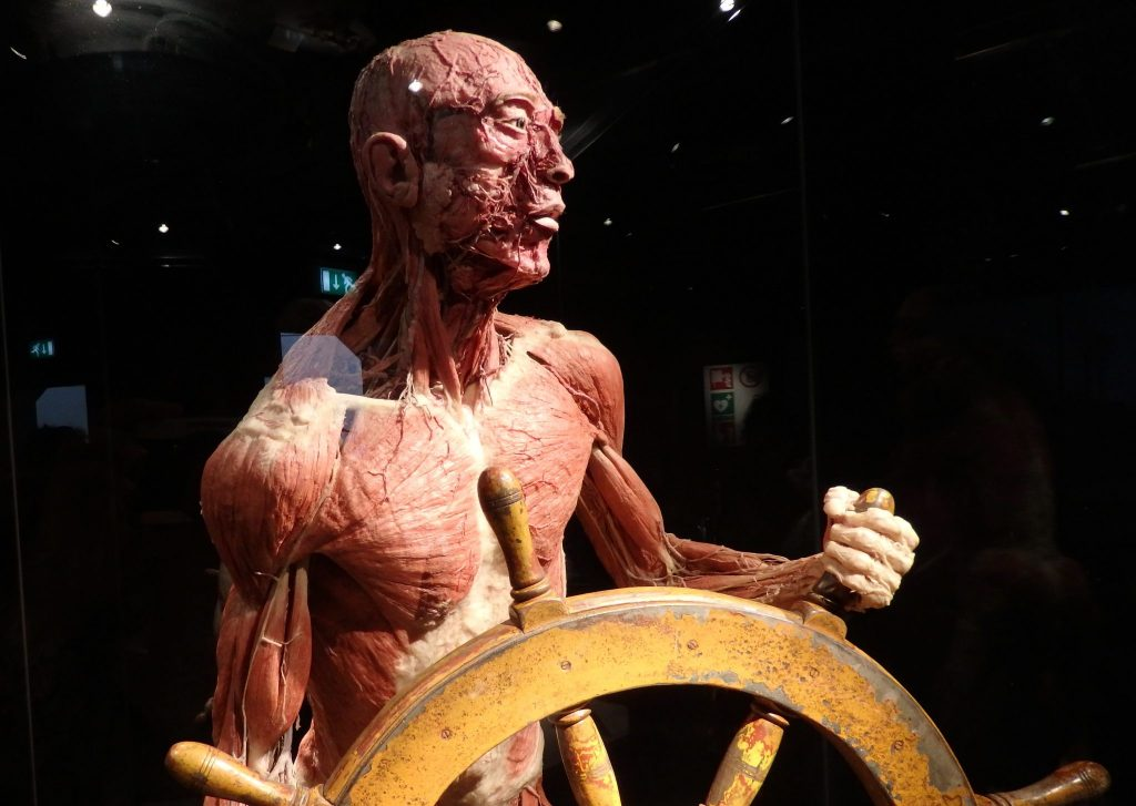 Im not sure why this plastinate had to be displayed at the help of as ship.