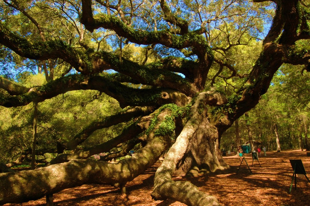 Paradise has always meant being amongst trees. And this Angel Oak Tree in South Carolina is the biggest granddaddy of them all. When I'm in the woods, my mind clears, peace surrounds, and I'm at home.