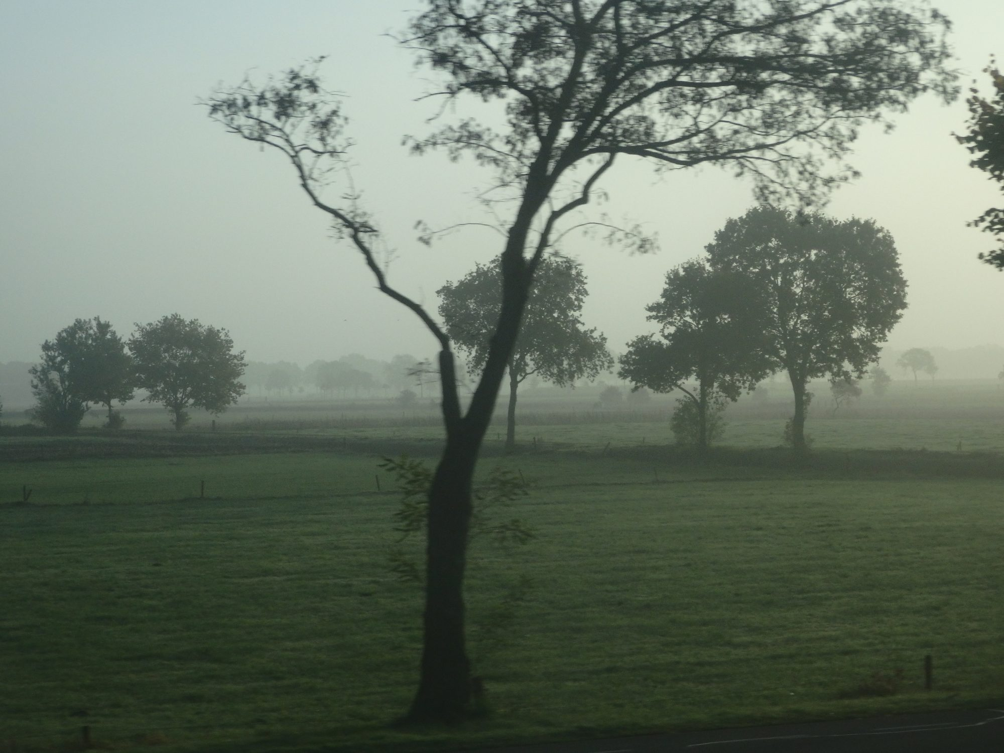 Sometimes in the mornings, a mist hangs over the fields. On my commute to Leeuwarden.
