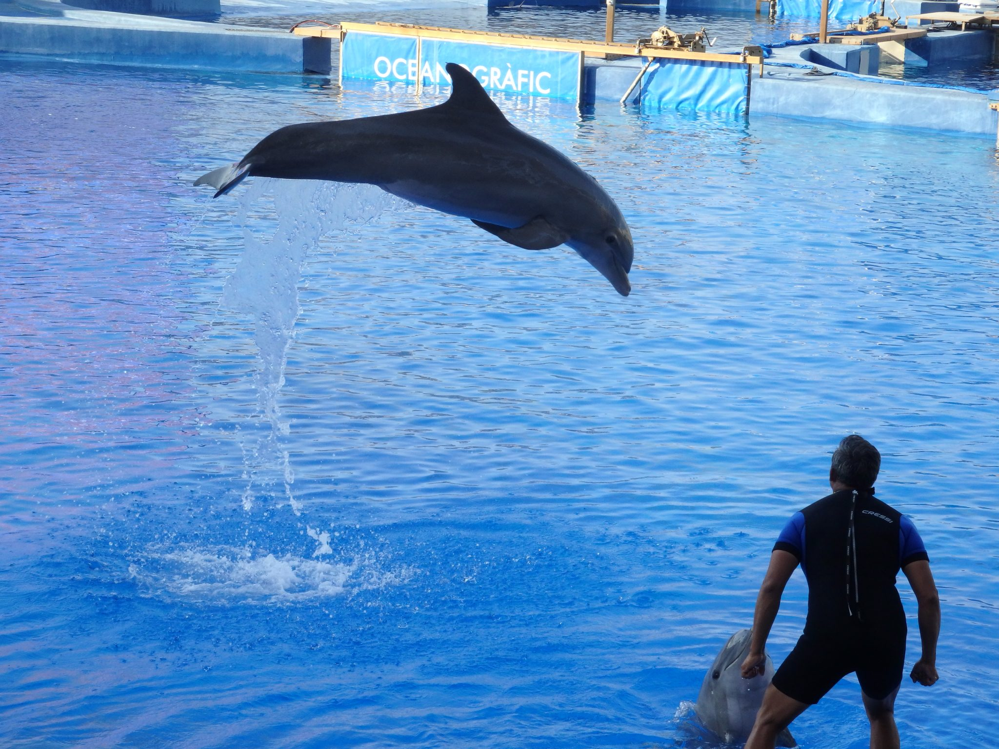a dolphin performing at the City of Arts and Sciences in Valencia, Spain