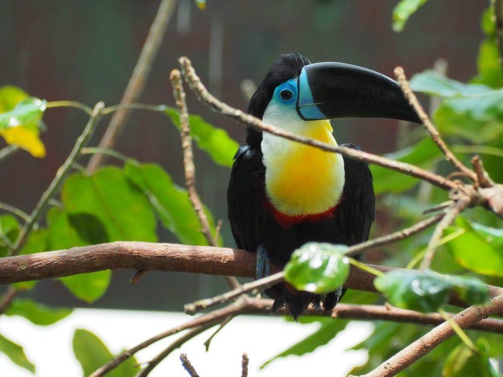 a toucan at Green Planet Dubai