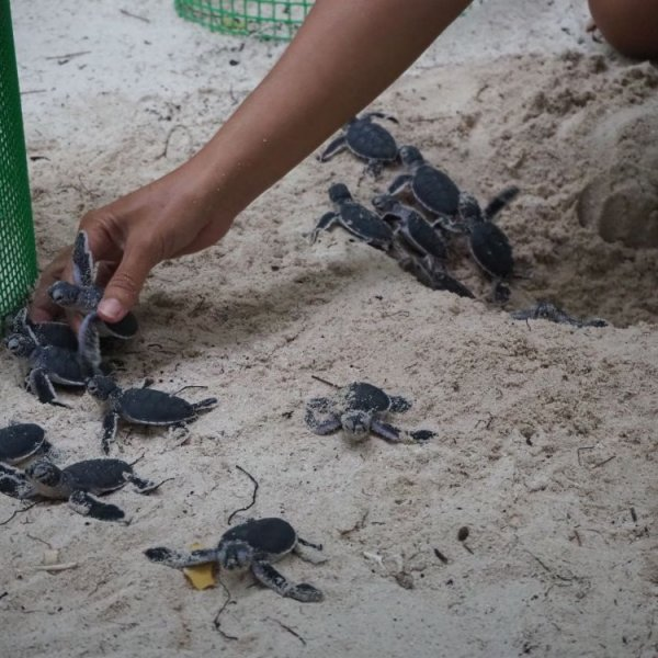 Visiting Turtle Sanctuaries in Malaysia (and elsewhere)