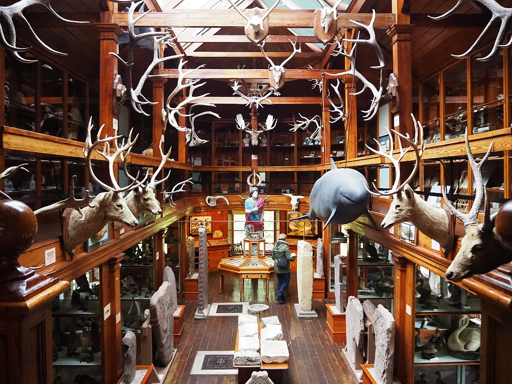 In this view you can see, besides more dead animal trophies, cases full of historical artifacts in cases lining both the ground floor and the upper gallery. Notice the large Pictish stones below.