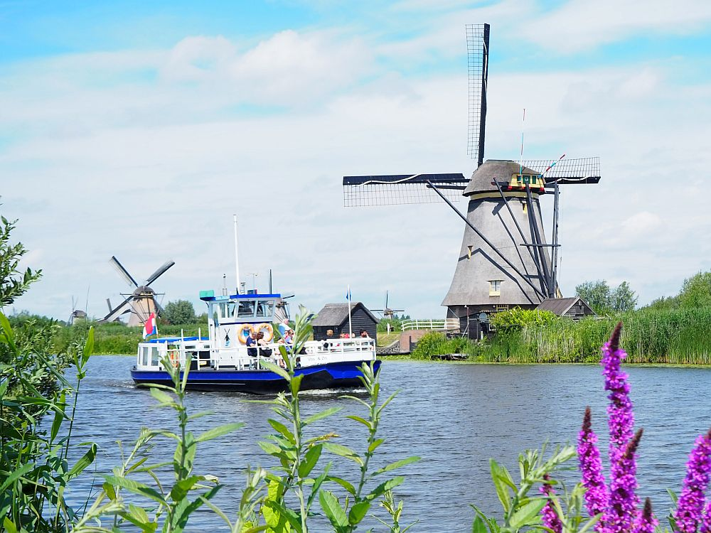 Seen across a canal, a motor boat - blue hull, white railings and bridge - in the middle of the canal, with a windmill the bank behind. In the foreground, some bright purple wildflowers.