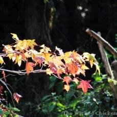 walk leaves
