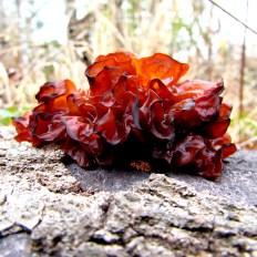 walk fungi