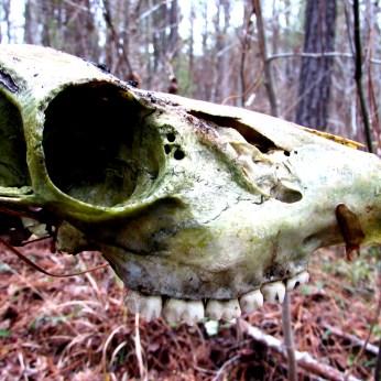 walk skull