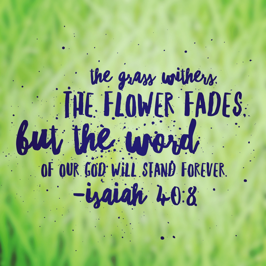 Everything Beautiful Bible Reading Summary Week 1