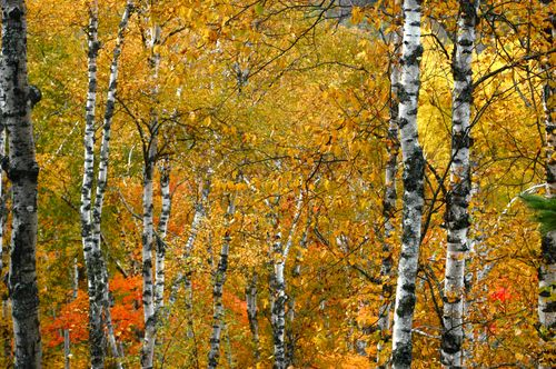 Northern Minnesota Autumn | Clean : : the LuSa Organics Blog