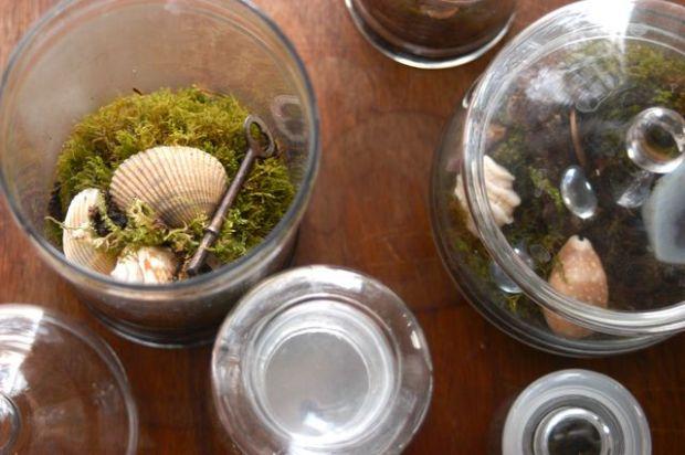 Terrariums | Clean. : : the LuSa Organics Blog