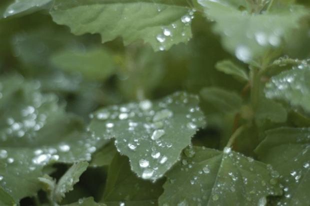 Exquisitely dreary