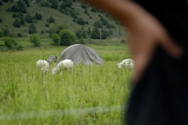 fresh pastures