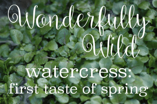 Wondefully Wild : : Watercress : : the first taste of spring : : Watercressto Pesto Recipe : : www.lusaorganics.typepad.com