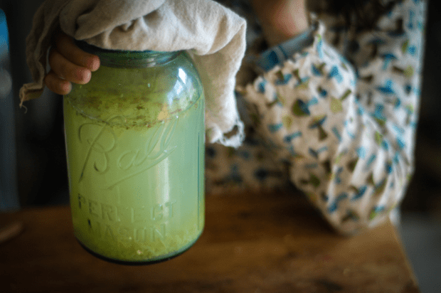 DIY Ginger Bug Soda Recipe : : Rachel Wolf : : Clean
