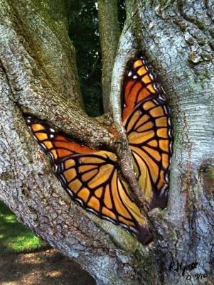 butterfly-tree2
