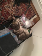 Belly enjoys our luggage