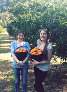 Kilos of mandarins for $10 a bucket