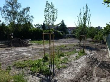 Obecná záhrada v Rači, jún 2014: Stromy už dotvárajú ráz záhrady.