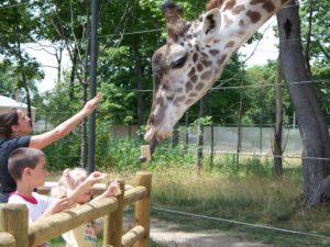 Giraffe Encounter - 480 dpi