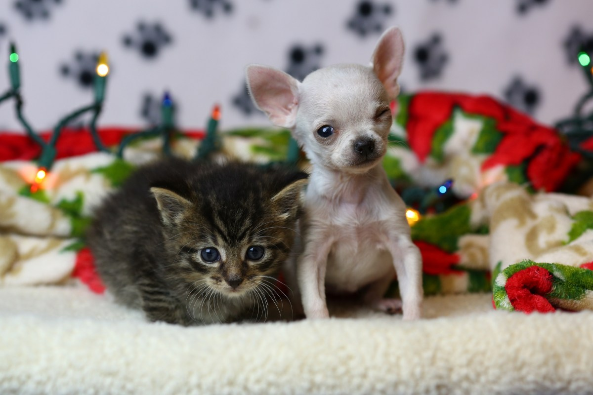 Meet Thumbelina, the Wisconsin Humane Society's tiniest adopted dog.