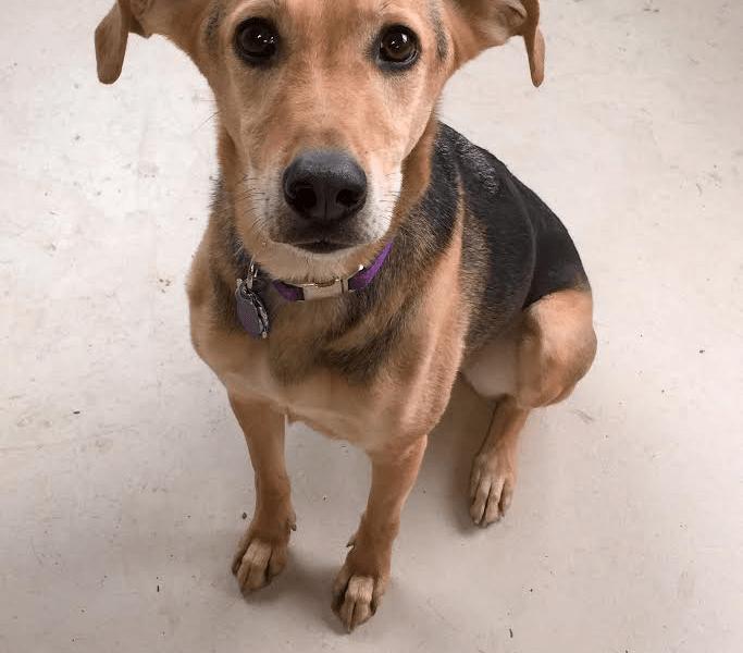 Meet Dega, She's Low Maintenance But Needs Some Love