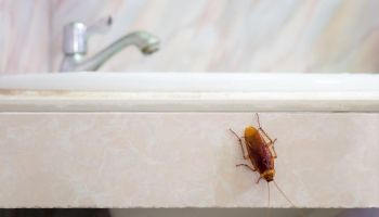 Common Causes for Pest Infestations at Home