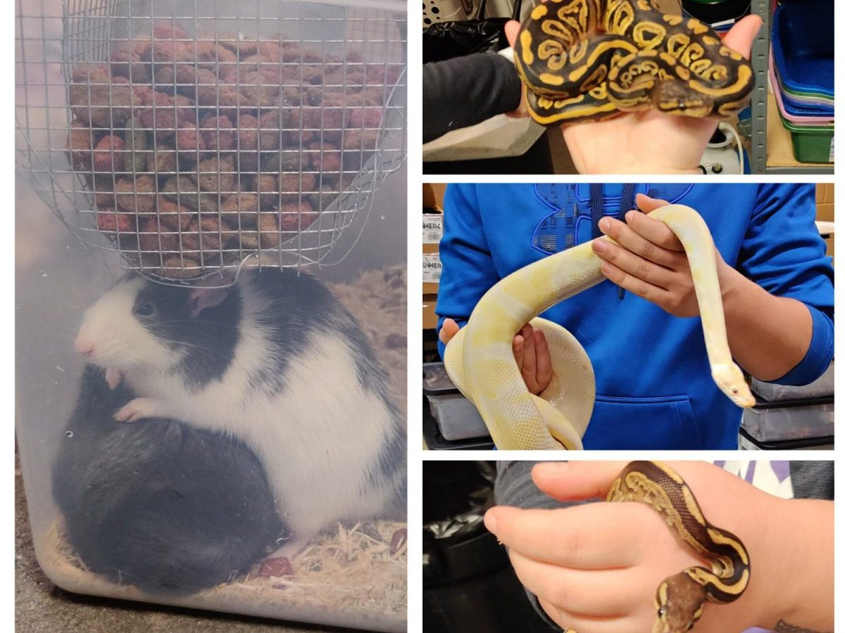 Wisconsin Humane Society, Exotic pets seized, Brown County