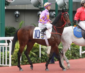 https://i2.wp.com/racing.hkjc.com/racing/content/Images/Horse/L285_l.jpg