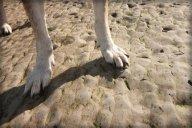 Dog paws CU.