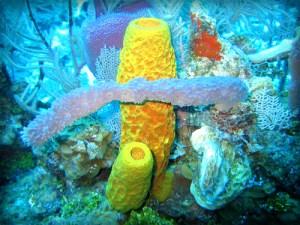 Sponge Diversity And Morphotypes. Photo: Twilight Zone Expedition Team 2007, NOAA-OE.