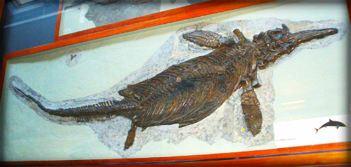 Mary Anning's Ichthyosaurus, Natural History Museum London. Image: Ghedoghedo.