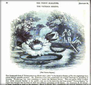 Inner page with illustration from Amazon. Penny Magazine, 1838. Image: Newspaper Archives.