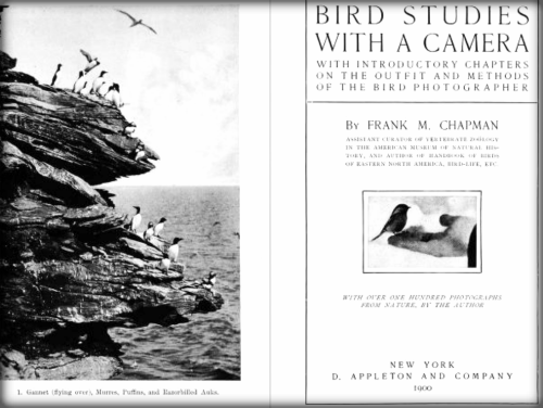 Bird Studies With a Camera by Frank M. Chapman.