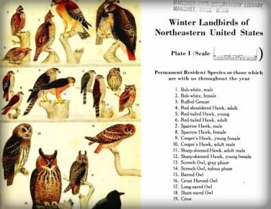 Winter Land Birds by Frank M. Chapman.