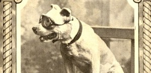 Horatio Jackson's Terrier Dog Wearing Goggles in 1903.