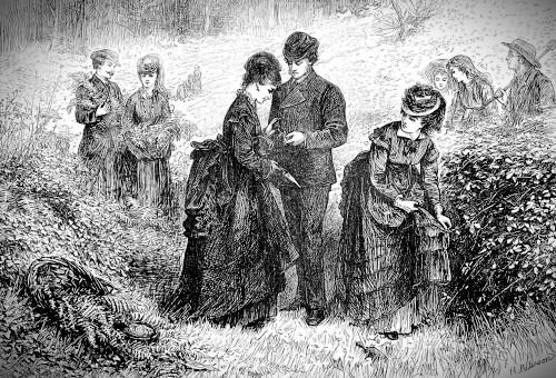 Gathering Ferns, The Illustrated London News, July 1, 1871. Image: Wikipedia.