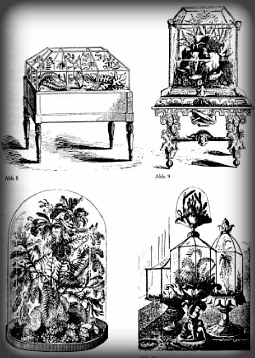 Dr. Ward's Cases, Book Illustration.