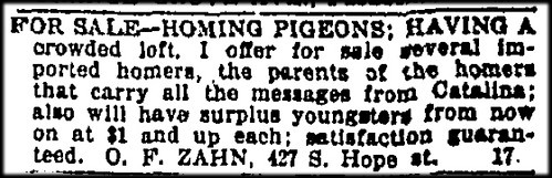 Homing Pigeons For Sale By Zahn. c. 1890s.