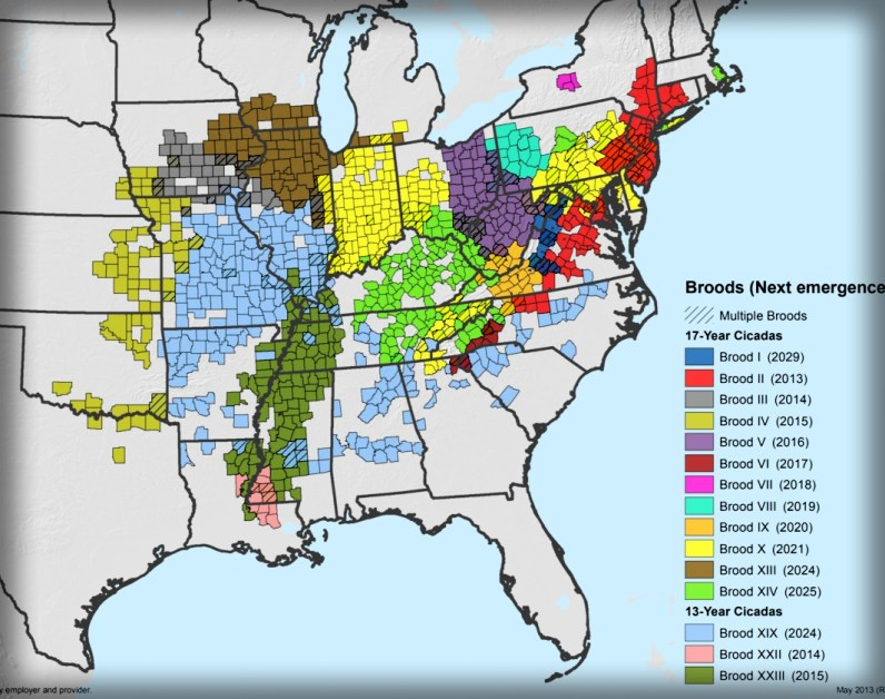 Periodical Cicada Broods of the United States. Image: USDA Forest Service map; Wikipedia.