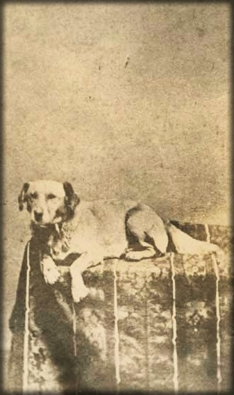Fido Lincoln, c. 1865. Image: Gilder Lehrman Collection.