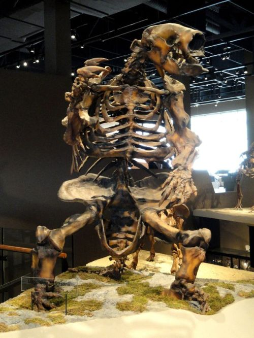Megalonyx_jeffersonii_-_natural_history_museum_of_utah_-_dsc07263