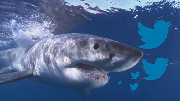 Tweeting-shark