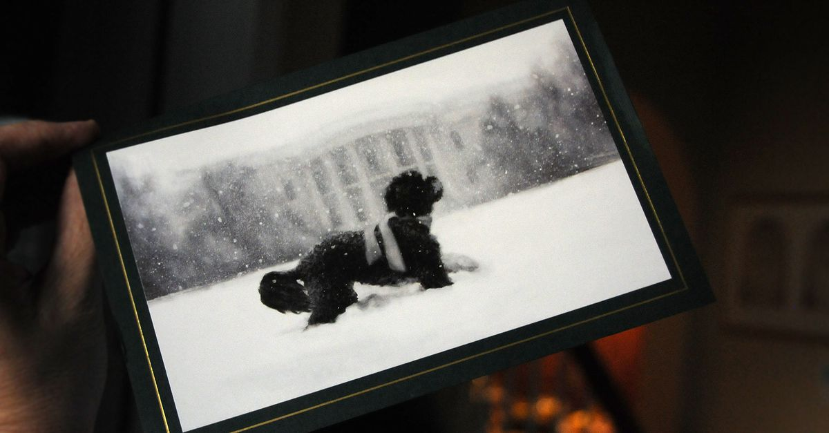First Look Dog Bo Graces Official White House Christmas Card