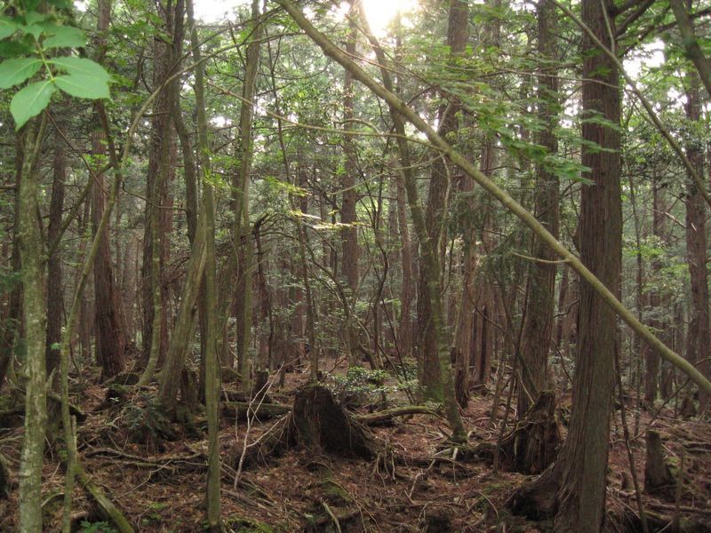 Aokigahara_forest